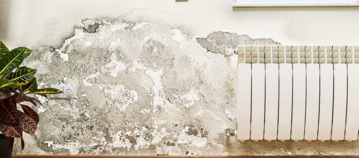 Moisissure et humidité : qui est responsable des travaux ?