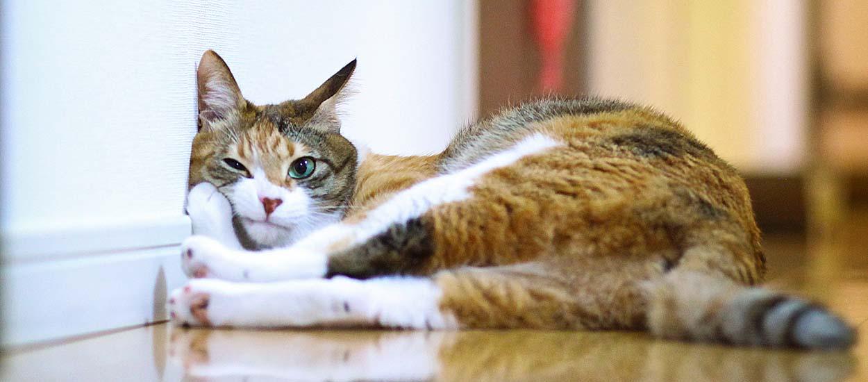 Découvrez si votre chat est déprimé juste en le prenant en photo !
