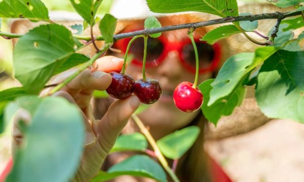 L'idée toute simple à piquer au Luxembourg pour ne plus gaspiller les fruits dans les jardins