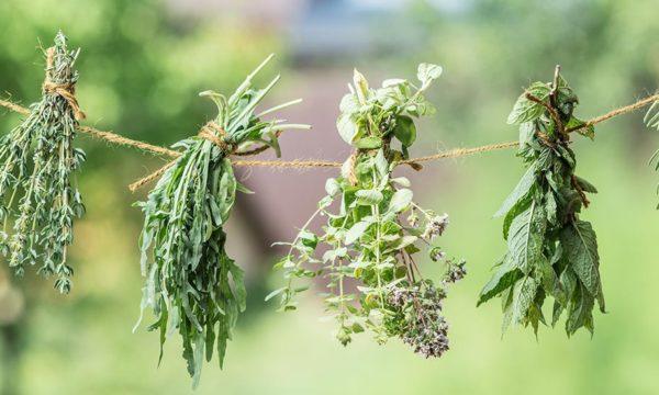 Comment conserver les herbes aromatiques que l'on récolte au jardin ?