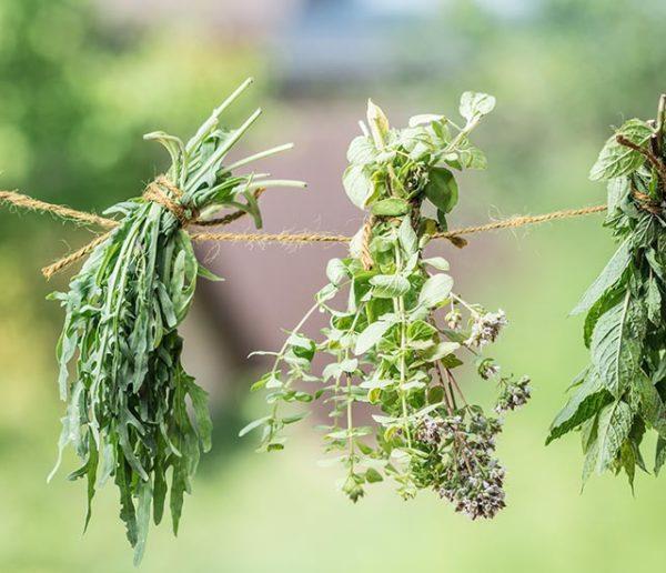 aménagement-plantes-aromatiques