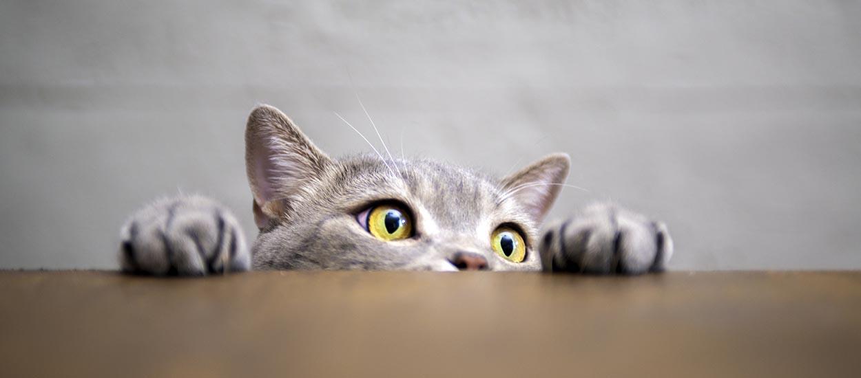 Voici la méthode pour retrouver votre chat perdu