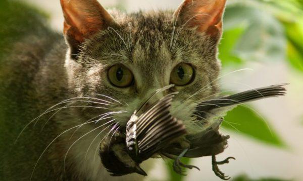 Comment éviter que votre chat n'extermine les animaux sauvages autour de chez vous ?