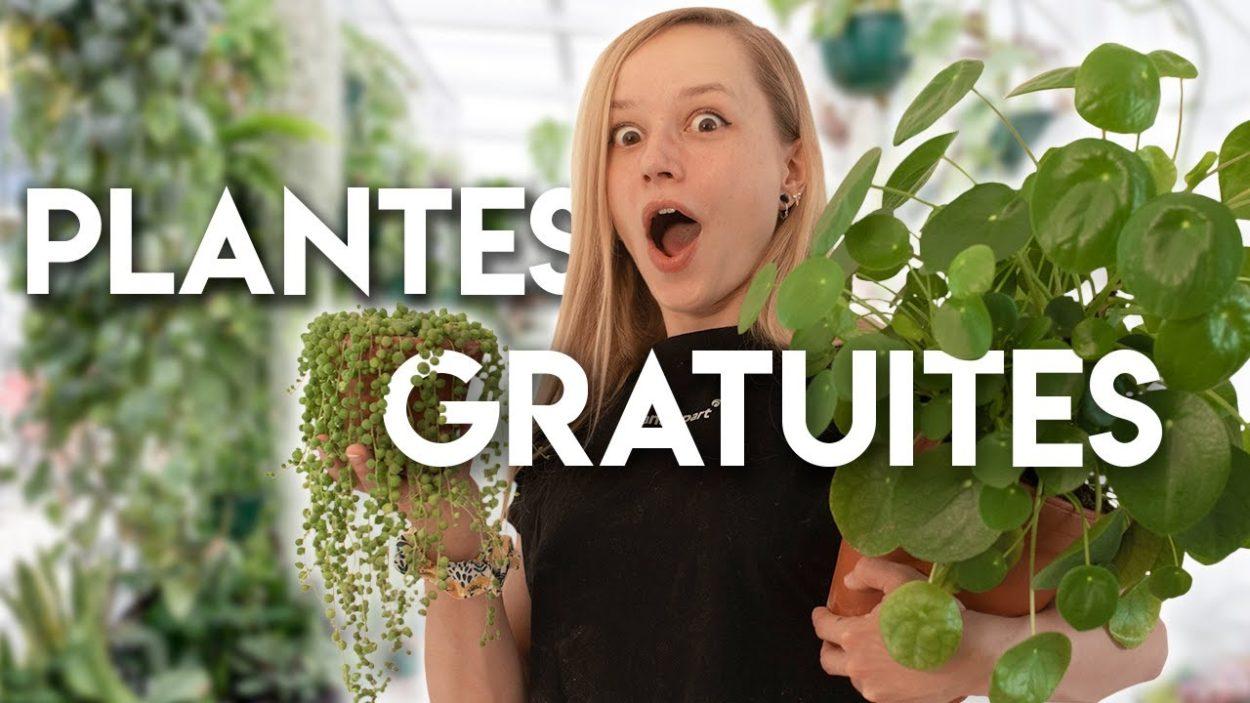 Comment avoir plein de plantes chez soi gratuitement ?