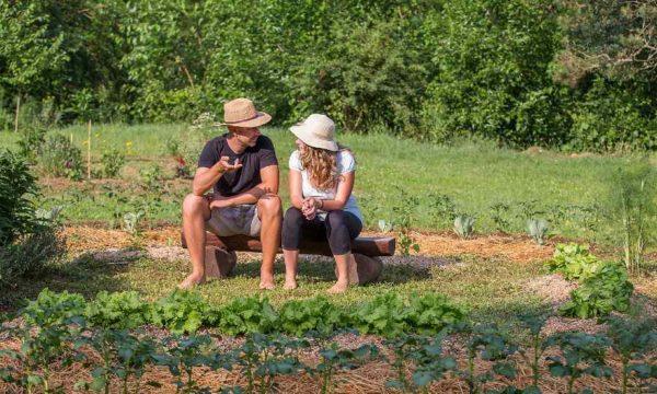 Petite histoire de la permaculture : comment cette philosophie est-elle devenue si populaire ?