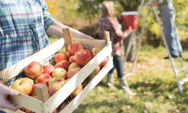 Fruits d'automne : nos conseils pour les conserver le plus longtemps possible