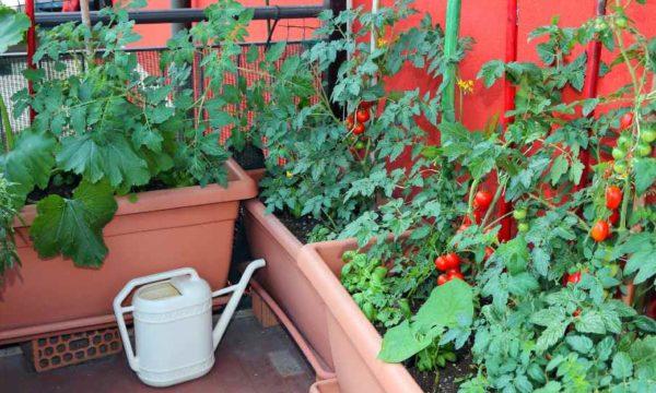 Potager gain de place : 8 légumes à faire pousser dans des pots
