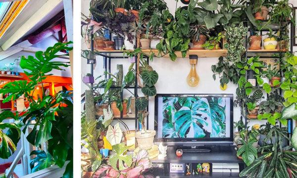 Il veut faire de son appartement une jungle de plantes vertes