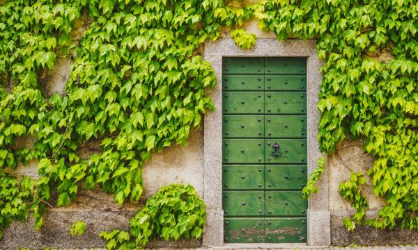 Avoir du lierre sur la façade de sa maison : bonne ou mauvaise idée ?